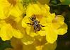 November 29, 2013 Busy Bee
