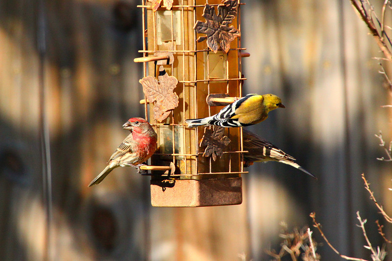 January 30, 2012 Backyard friends on a bright Sunday morning