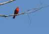 """November 12, 2012 """"Cardinal"""""""