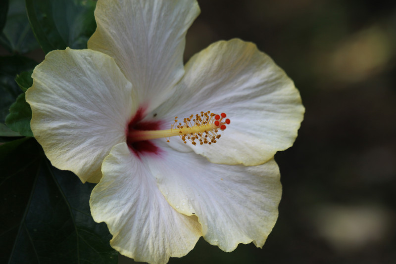 "March 18, 2012 ""Hibiscus"""