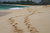 "I looked back after my wife and I walked down this north shore beach and captured this ""trail in the sand"" was not as straight as it could have been. my real intent of posting this photo is to lobby for another trip to the islands."