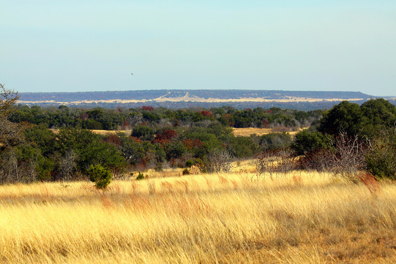 "December 5, 2010 "" Central Texas Fall""  A few red oakes, possmhaws, sumacs gloden brown grasses, a big sky and that is about it for fall. The soaring spec in the center is a black buzzard looking for its next meal. The distant hill is Fort Hood's Manning Mountain with trails up the side is for military vehicles (tanks etc). best seen in X3"