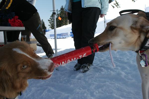 sat april 23 avalanche dog portraits at mazot fest