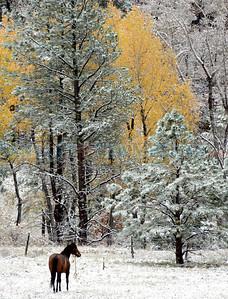 987875_101613Pecos_Snow-lede-toned-cmyk.jpg
