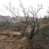 The Dixon Apple Orchard was badly burned due to the on-going Las Conchas Fire.  Over 10 percent of their trees are gone, their home in uninhabitable and they lost other structures on their property.  The business has been in the family since 1944.<br /> Photos by Jane Phillips/The New Mexican