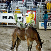 Action shots from the Rodeo De Santa Fe on June 25, 2010.                Luis Sanchez Saturno/ The New Mexican.