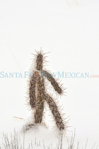 Cactus Snow Man. Final Frame Clyde Mueller/The New Mexican