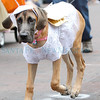 Pet Parade Gallery, September 9, 2012 :