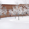 Winter scene on the grounds of the Santa Fe Community Conference Center building.<br /> Clyde Mueller/The New Mexican