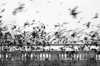 2005-01-24_03745 Die Vögel!