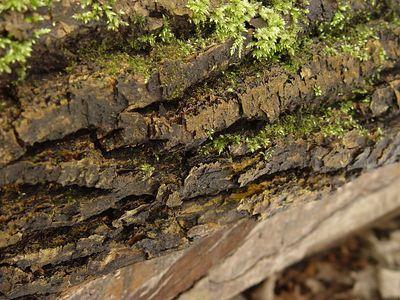 2005-03-09_04320 Baumrinde aus der Nähe