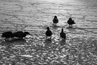 2005-03-15_04398 Die Gang