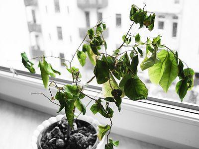 2005-03-14_04388 wenigstens sind die Blätter noch grün
