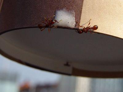 2005-04-16_04617 Ameisenmilchshake