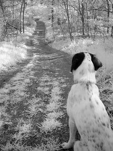 2005-05-06_04751 Der lange Weg zurück (mehr Infrarot Bilder)