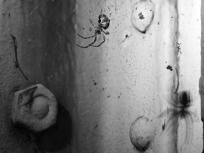2005-05-16_04853 Spinnenzeit