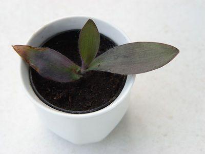 2005-05-10_04809 Bestandsaufnahme meiner 1. Grünpflanze in Leipzig. Danke Lisa.
