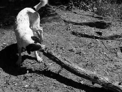 2005-08-21_06098 einen größeren Ast haben wir für Santo leider nicht gefunden