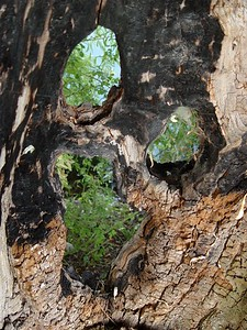 2005-08-30_06142 Baumsmiley