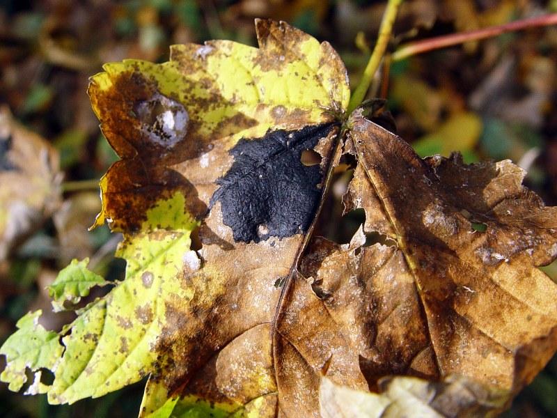 2005-11-13_07238 Zerfall Decomposition