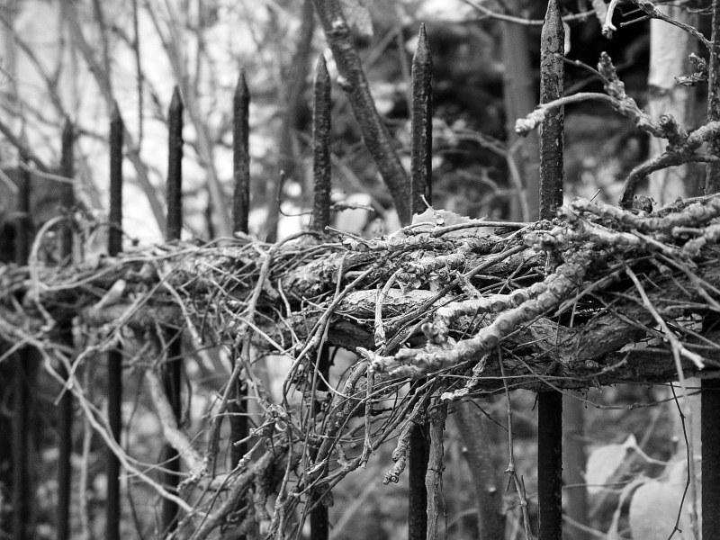 2005-11-15_07277 Dornröschenzaun Fence to Sleeping Beauty