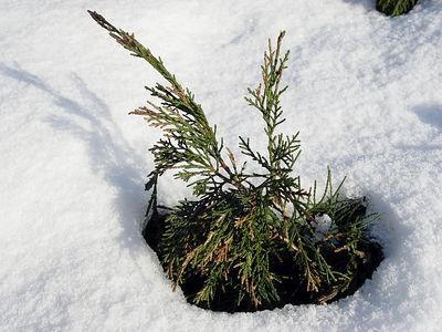 2006-01-24_08422 Es liegt noch Schnee in Wittenberg. There's still snow in Wittenberg