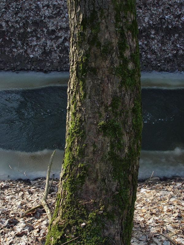 2006-01-29_08466 Baumstamm + Bach = ? tree trunk + stream = ?