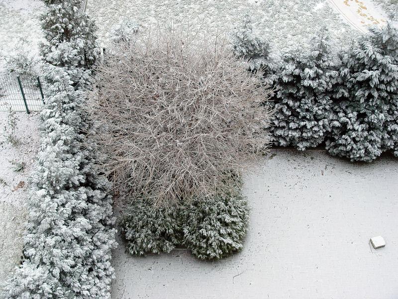 2006-02-02_08490 Eine dünne Schneeschicht hat sich erneut auf die Bäume gelegt. Snow has been falling again resulting in a very thin snow cover on the trees.