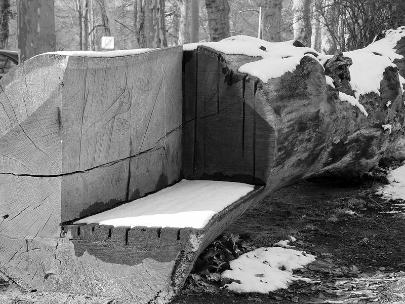 2006-03-07_08904 Bankstamm oder Stammbank ? bench trunk or trunk bench ?