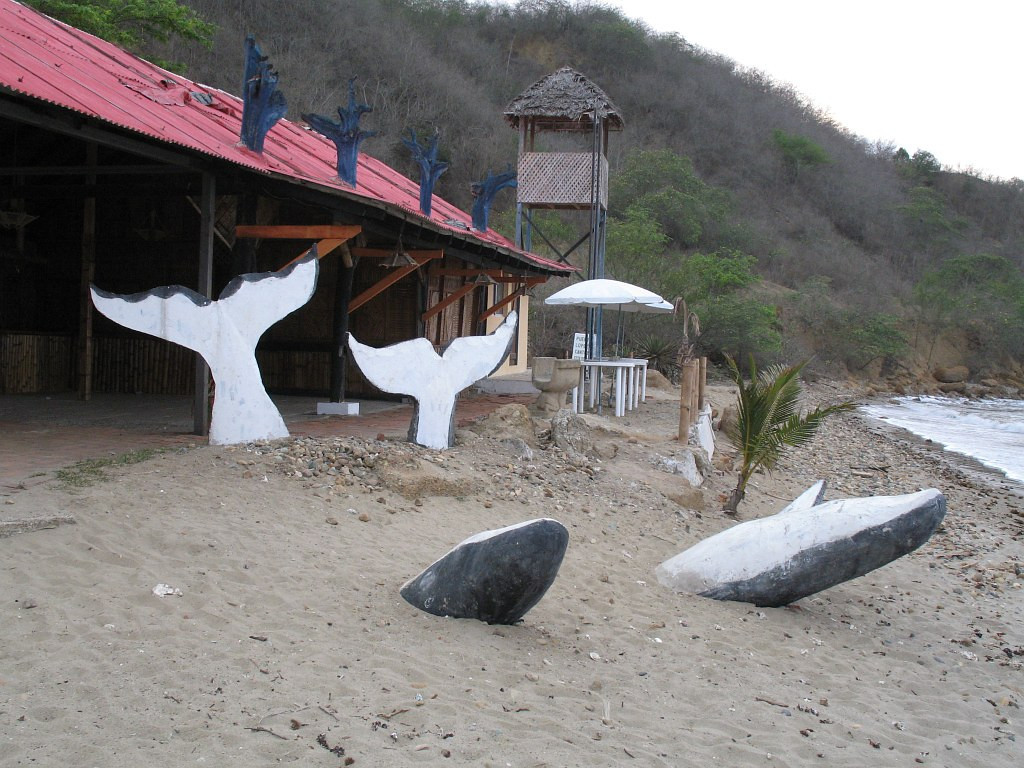 2006-12-24_12403 out-of-season whales Wale ausserhalb der Saison ballenas fuera de la temporada