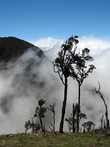 2006-12-30_12619 cloud forest in the Reserva Ecológico Las Ilinzas near Chugchilán Wald in den Wolken im Reserva Ecológica Las Ilinzas bei Chugchilán bosque en las nubes en la Reserva Ecológico Las Ilinizas cerca de Chugchilán