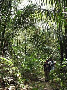 2006-12-17_12177 [Capo Pasado] ... including a tropical rainforest [Capo Pasado] ... inklusive eines tropischen Regenwaldes [Capo Pasado] ... incluso un bosque de lluvias tropical
