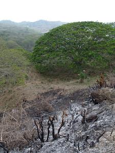 2006-12-16_12109 Capo Pasado - one of the last few untouched coastline forests of Ecuador endangered by deforestation... Capo Pasado - einer der letzten der wenigen unberührten Küstenwälder Ecuadors bedroht von der Abholzung... Capo Pasado - uno de los últimos bosques intactos tropicales de la costa de Ecuador...