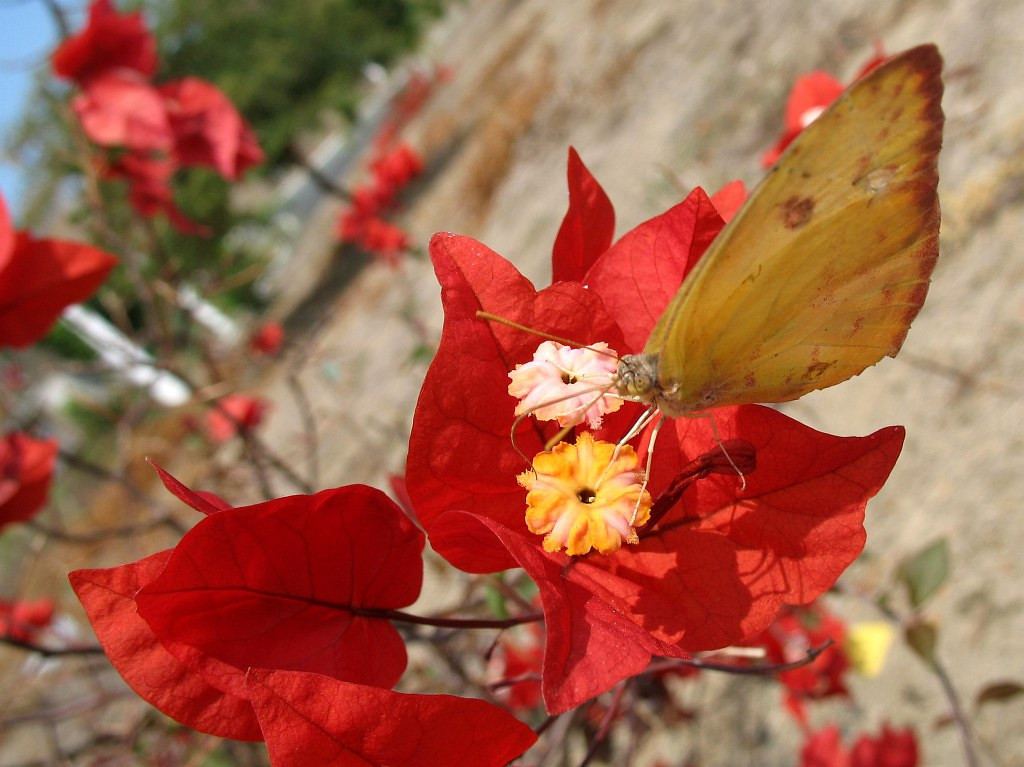 2006-12-09_12071 Butterfly Effect Schmetterlingseffekt efecto de mariposa