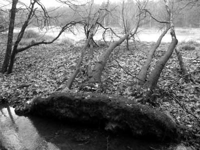 2009-03-01 Tree Canoe