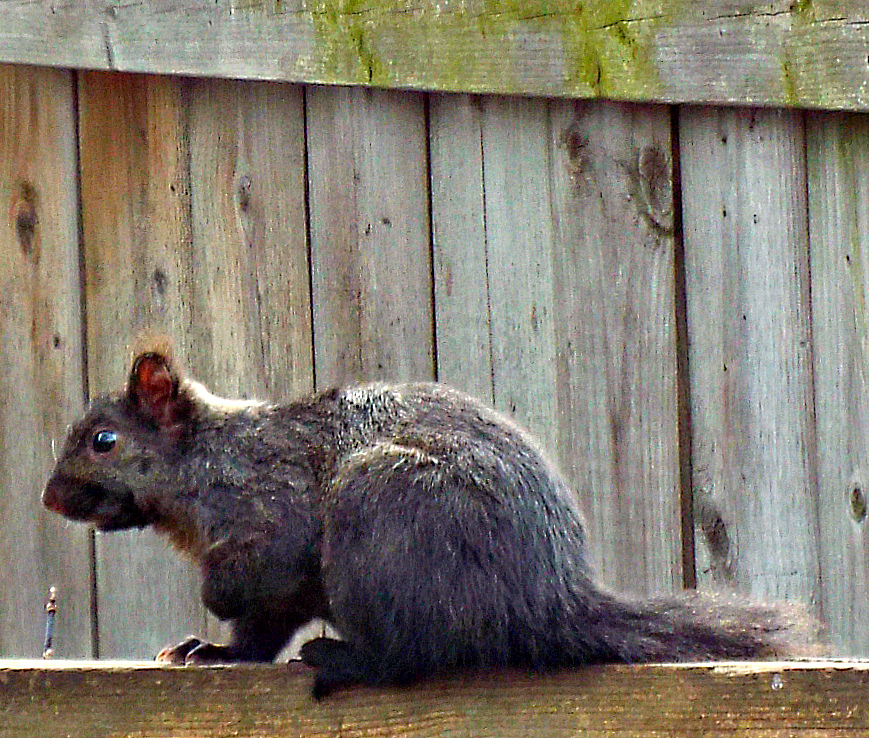 YESTERDAY- IN SHEDIAC  TODAY - IN MY BACK YARD,,,,ONLY DREAMING OF SHEDIAC VACATIONS . THE COLD LOOKING SQUIRRELL IS FOR REAL...28/02/16