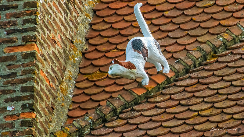 Deco  -  Cat on the Roof  -  La Rochelle