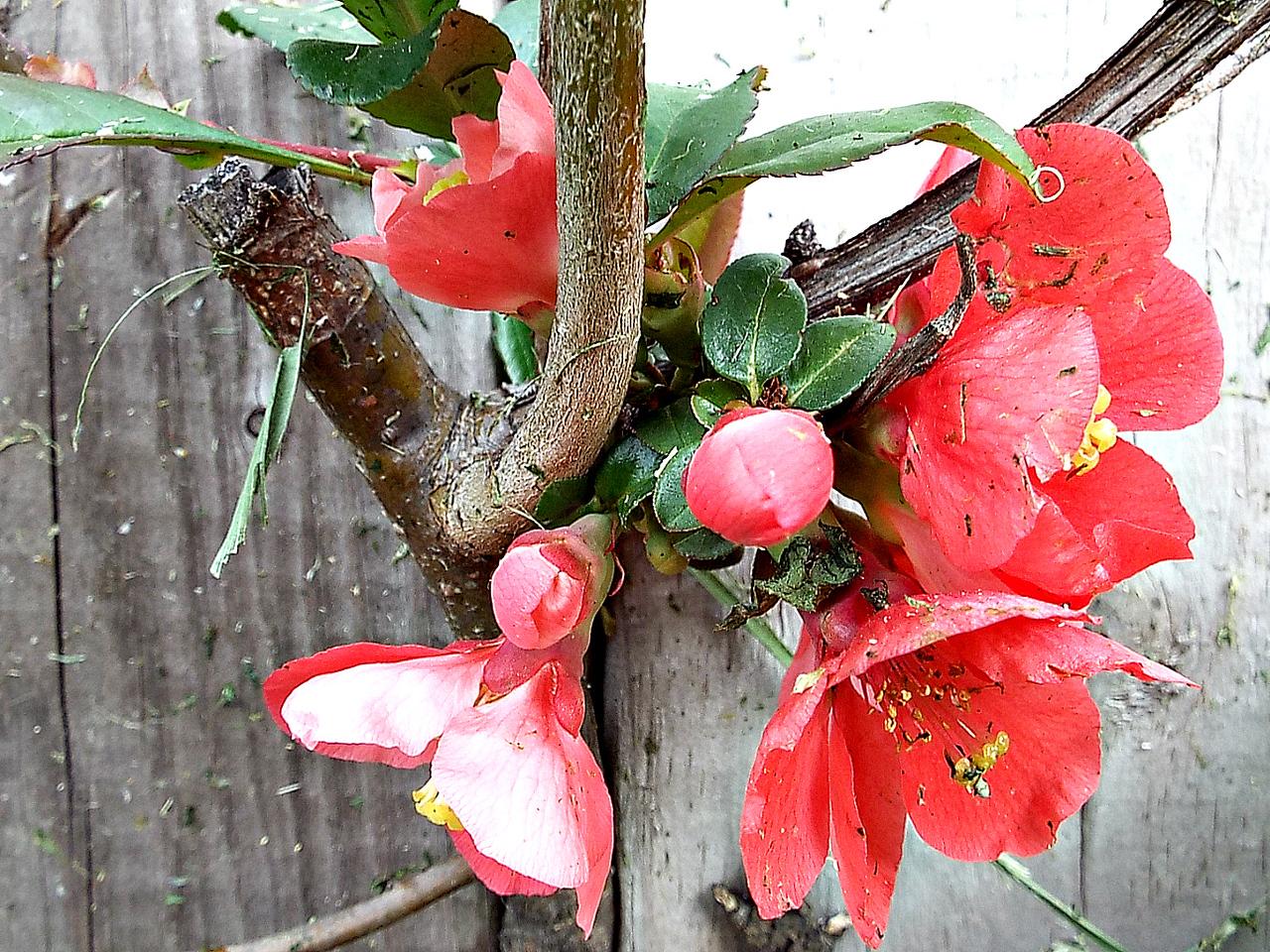 springy colors   18/05/16