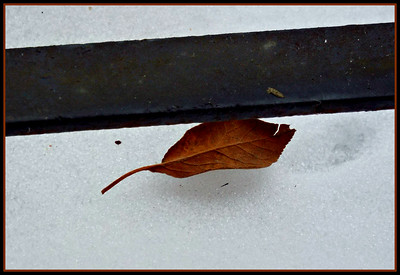 A LEAF IN  NB  MID WINTER 2/16/19