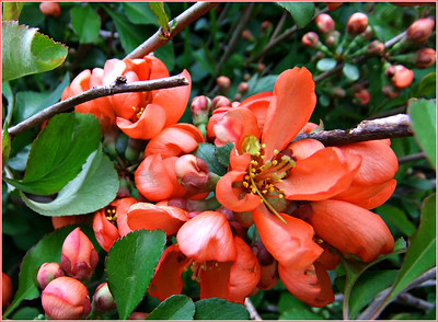 On the front lawn . Thorns , had a few dried up berries on it , we pruned it down , according to a gooseberry bush (google) . Not sure what it is ? Quince? 2019/ 06/04