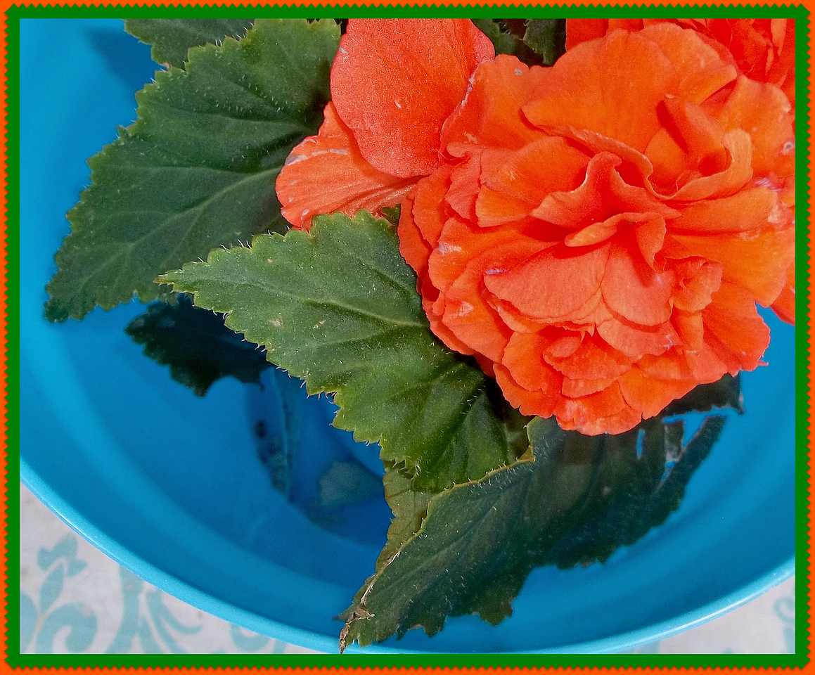 BEGONIA,,I SAY,,,,OUR FAVORITE COLOR!!!!  5/17/18