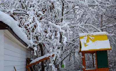 Happy Thanksgiving  all my USA friends . Give thanks for turkey and not having a yard that looks like this!!!  FREEZING!!!!! 11/22/18