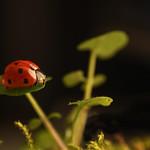 Ladybird  - 5