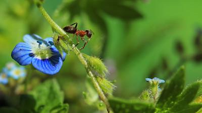 Ant by Bruno SUIGNARD