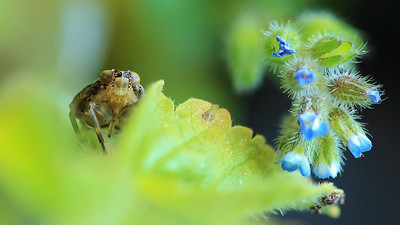 Bug?? By Bruno SUIGNARD