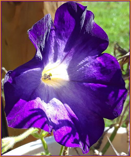 purple in the sunshine 10/10/18