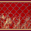 "January 26,2013<br />   This reminds me of a Punch and Judy show , or the curtain before a play , but it is a red painted,steel fence backing a little shed in a back yard . Looks like a potting shed, with flower pots and a few drying plants scattered about in between this chain link fence and the colorful wall. I shot a few captures, and was thinking I'd get some of those whimsical looking , artsy shots but this was the only one of clarity!   Love the brightness in a cold Winter month.<br />   Thank you for putting me up in number one! Paul might be right about the naps , but they are actually ""sleep ins"" for as long as I want! Woohoo"