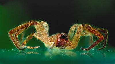 Small SPIDER -   by Bruno SUIGNARD