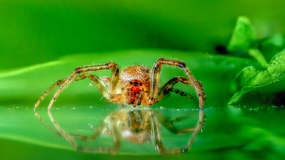 Tiny  SPIDER -   by Bruno SUIGNARD