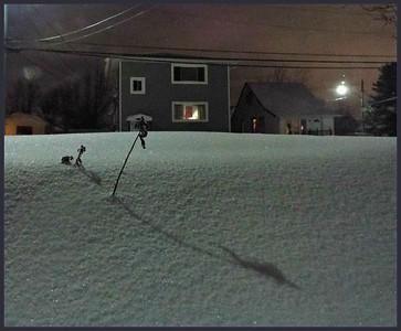 NIGHT LIFE SNOW DRIFT,,,  2/15/19  thanks judy,,see the new crop  xxxx